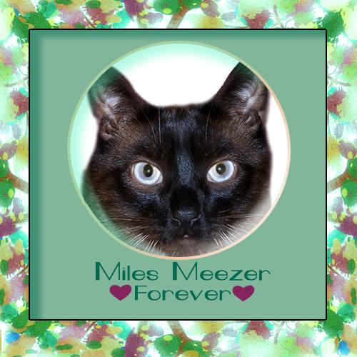 Miles Meezer Forever