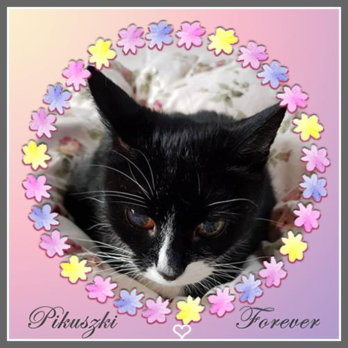 Rest In Peace Dear Pika