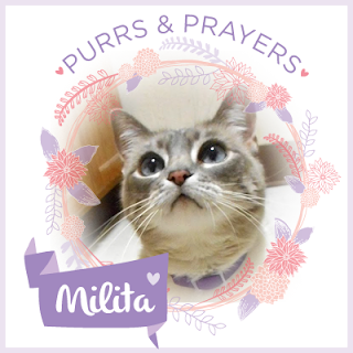 Purrs & Prayers For Lita
