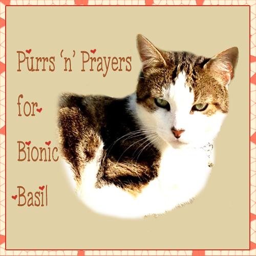 Purrs & Prayers For Bionic Basil