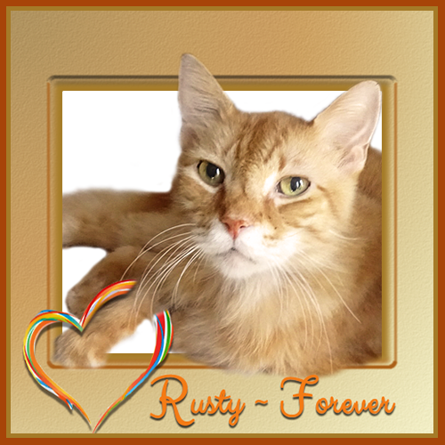 Rusty – Over The Rainbow Bridge