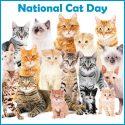 National Cat Day 10/29 Blog Links