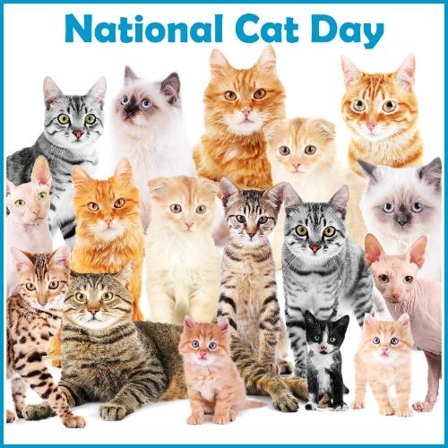 National Cat Day 10 29 Blog Links Catblogosphere