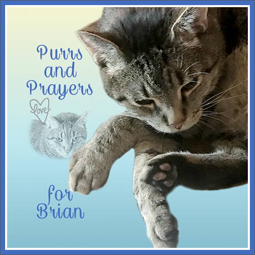 Purrs & Prayers For Brian
