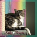 Sally Forever