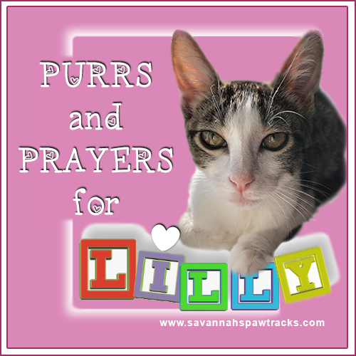 Purrs And Prayers For Lilly