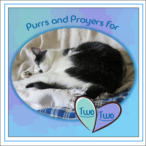 Purrs Prayers And The Power Of The Paw For TWO TWO