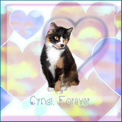 Farewell Dear Cyndi