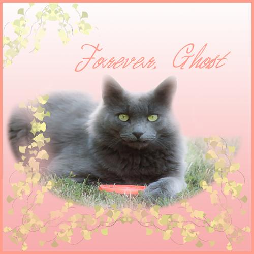 Rest In Peace Dear Ghost Kitty