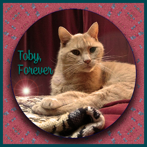 Rest In Peace Sweet Toby