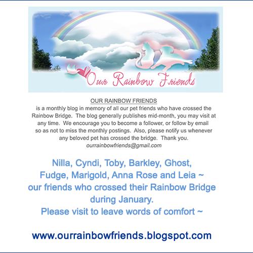 Rainbow Friends – January 2019