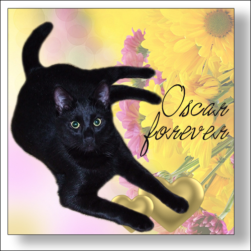 OSCAR ~ Over The Rainbow Bridge