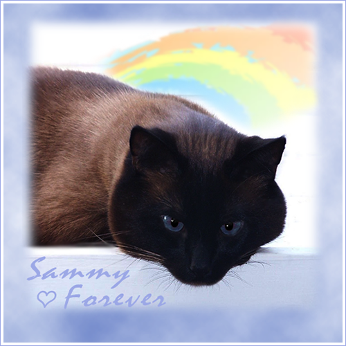 Sammy Meezer ~ Over The Rainbow Bridge