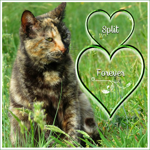 Forever Split