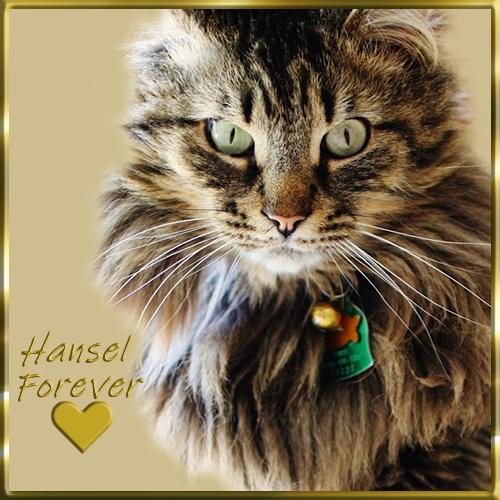 Hansel Forever