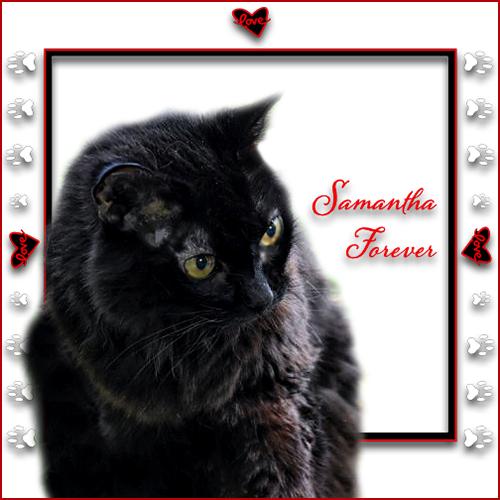 Samantha Forever