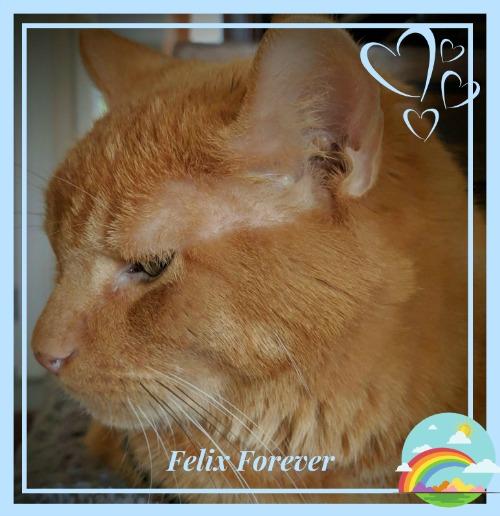 Felix Forever
