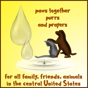 Paws Together – Purrs And Purrayers