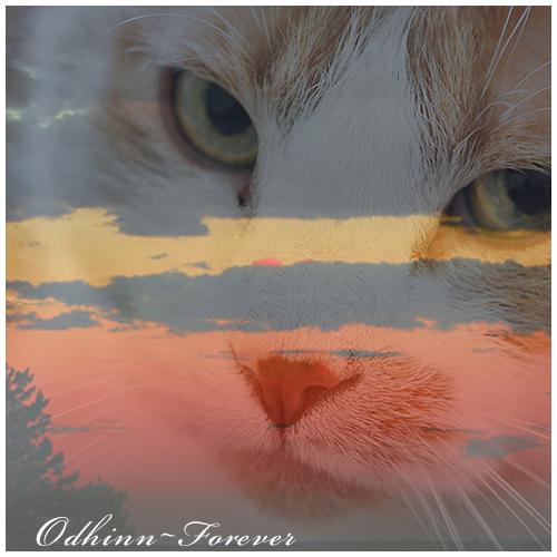 Odhinn Forever