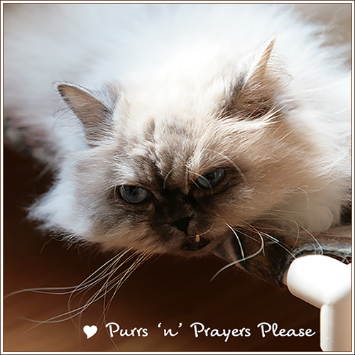 Purrs 'n Prayers For Zoey