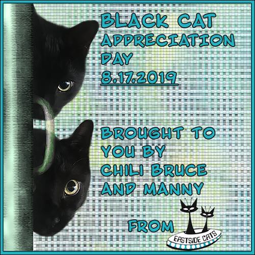 https://eastsidecats.blogspot.com/