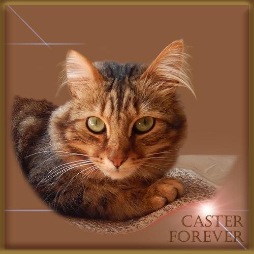 Caster Forever