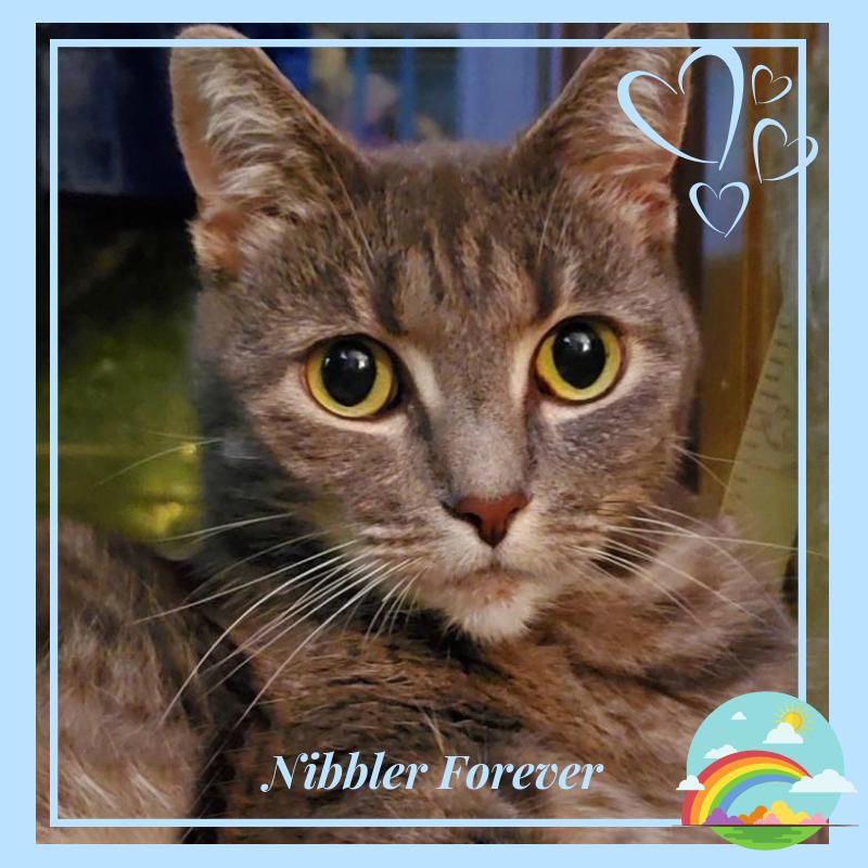 Nibbler Forever