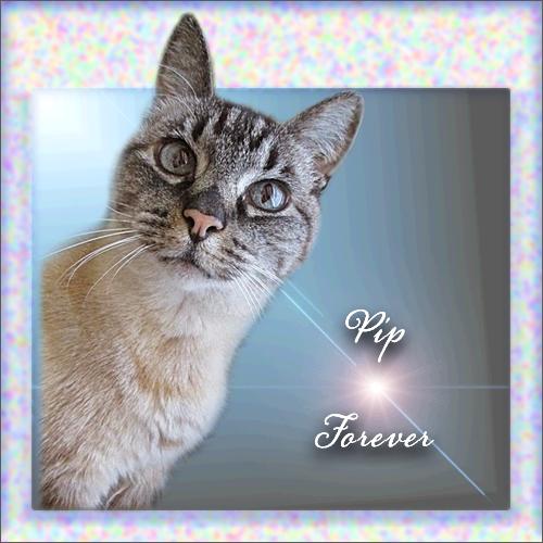 Pip Forever