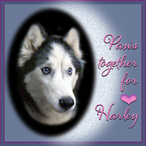 Paws Together For Harley