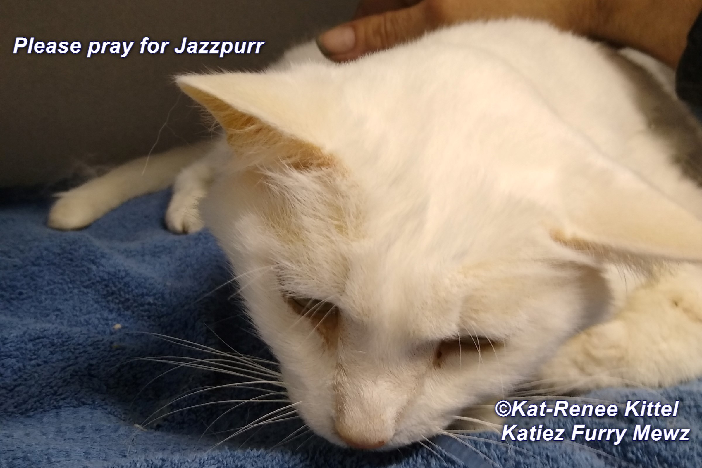 Purrs 'n Prayers For Jazzpurr