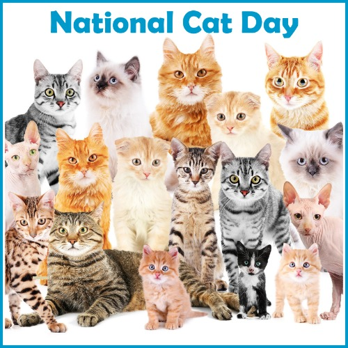 Friday 10 25 Blog Links Catblogosphere