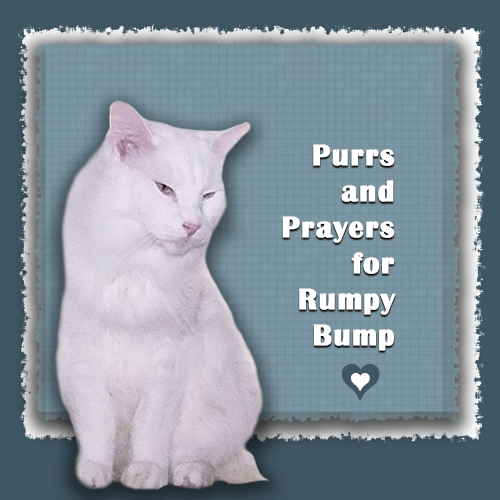 Purrs, Prayers And POTP For Dear Rumpy Bump