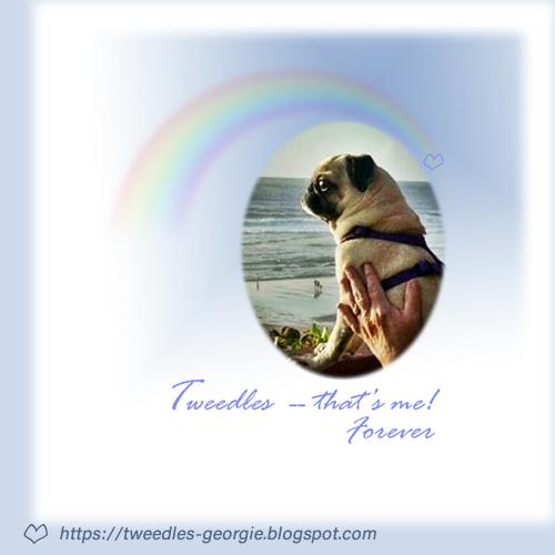 Tweedles Forever
