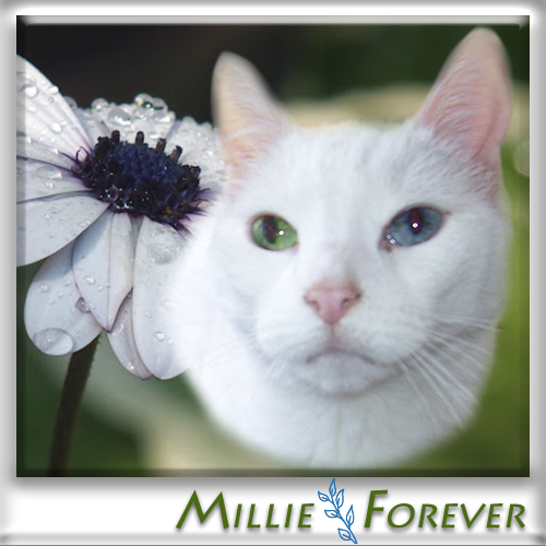 Millie Forever