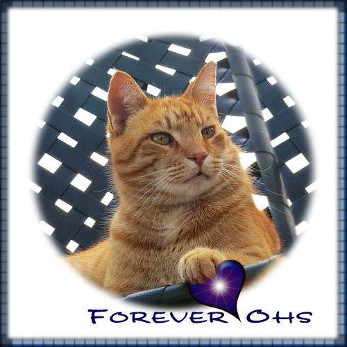 Forever Ohs