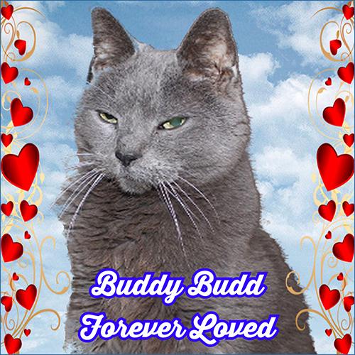 Buddy Budd ~ Forever Loved