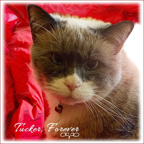 Tucker Forever