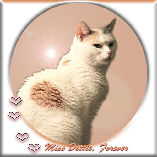 Miss Dottie Forever