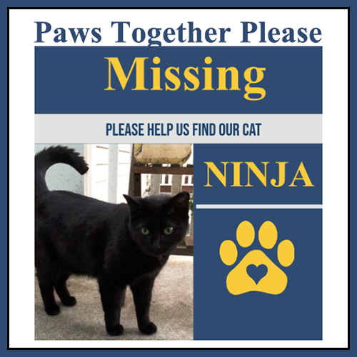 Ninja ~ Please Come Home