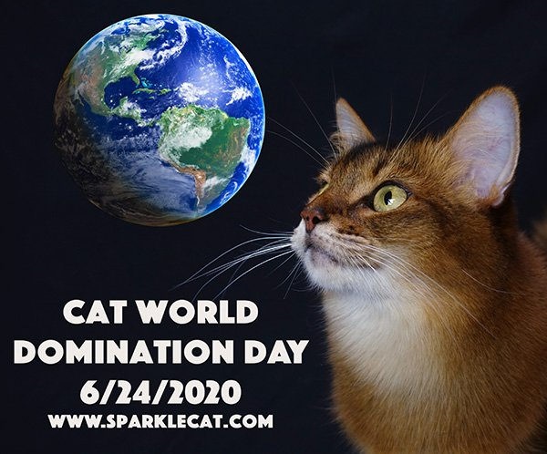 Cat World Domination Day 6/24 Blog Links