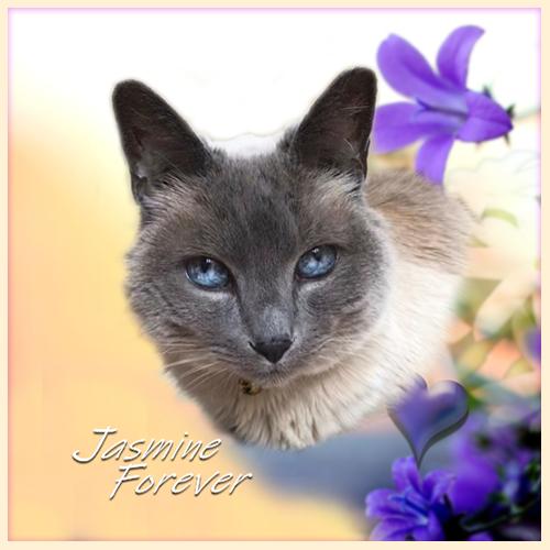 Jasmine Forever