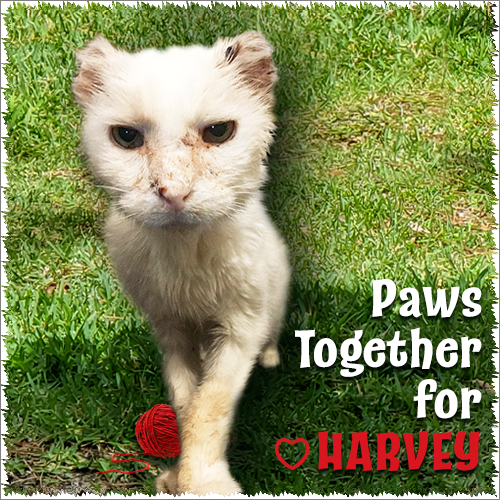 Paws Together For Sweet Harvey