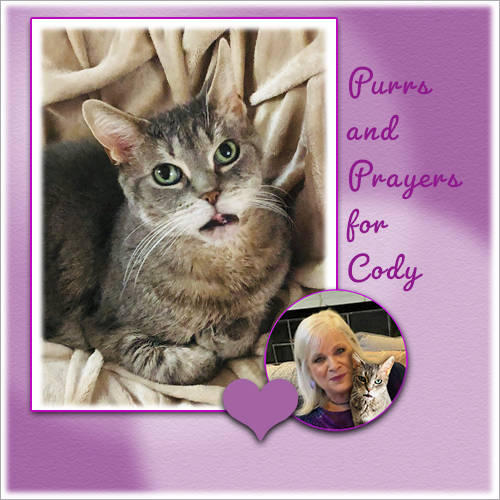 Purrs, Prayer And POTP For Cody