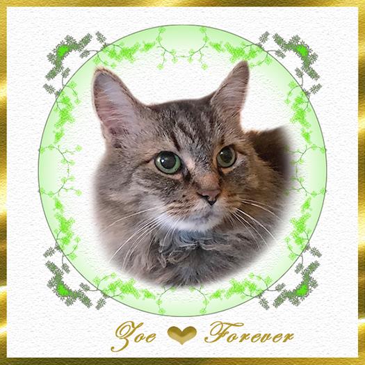 Zoe Forever