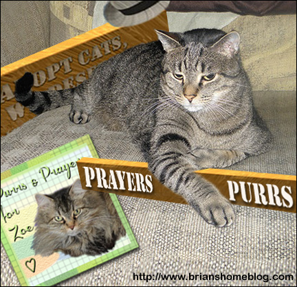 Purrs 'n Prayers For Zoe