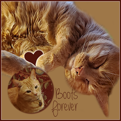 Boots Forever
