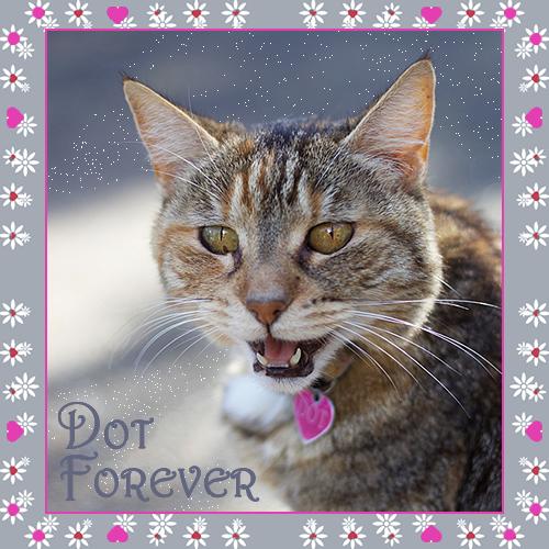 Dot Forver